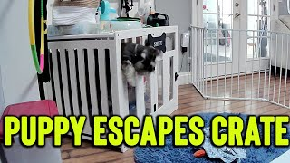 Smart Dog Escapes His Cage And Playpen || Best Viral Videos