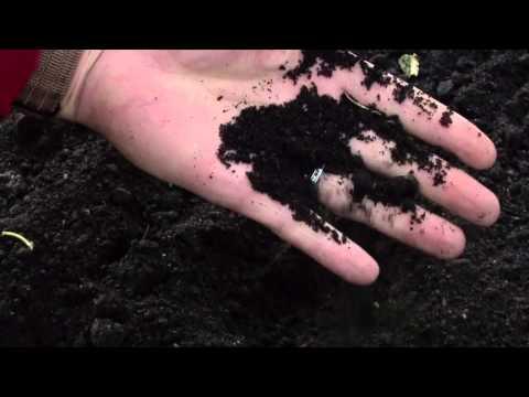 видео: Осенняя подготовка почвы