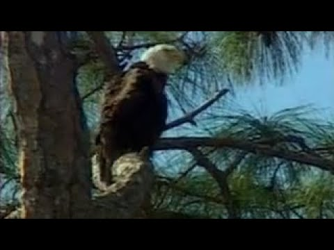 Americas Wildest Places Blackwater National Wildlife Refuge, yland