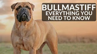 Bullmastiff 101 - Everything You Need To Know About Owning A Mastiff Puppy