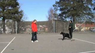"""Training My Dog Not To Be Scared With """"the Cautious Canine"""""""