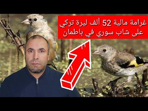 غرامة مالية 52 الف ليرة تركي على شاب سوري بسبب طائر الحسون