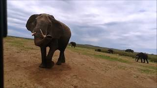 Funny wild animal videos try not to laugh