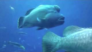 Georgia Aquarium Experience - Beluga Wha...