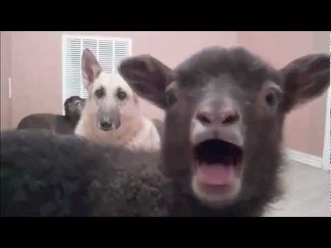 Mockingbird performed by Harry, Lloyd, and the Yeah Lamb.