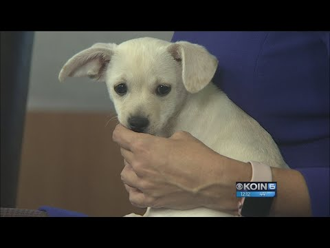 Second chance pets: Huey, Louie and Dewie