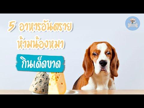 5 อาหารอันตราย ห้ามน้องหมากินเด็ดขาด | SudPad-Dog