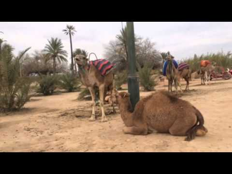 11 mile Weekend Run Around Marrakech Morocco