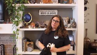 How To Groom Your Dog at Home (Springer Spaniel)