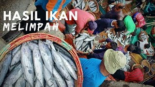 Pasar Ikan Terbesar di Aceh || Fish Market Documentary