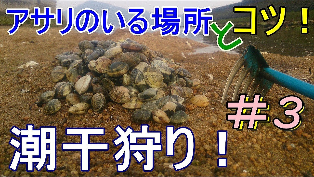 沖縄 潮干狩り