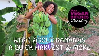 What About Bananas? | A Quick Harvest & More