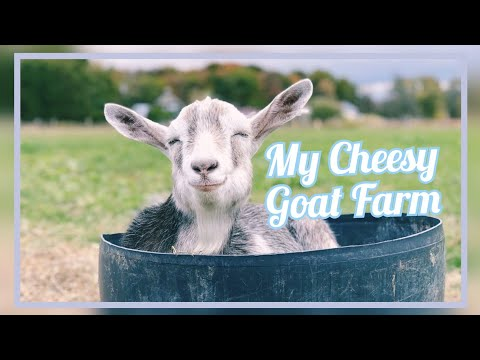 My Cheesy Goat Farm - Off Grid Sustainable Goat Cheese Farm in Portugal