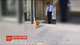 Два коти стали талісманами музею, до якого їх не пускають вже протягом двох років