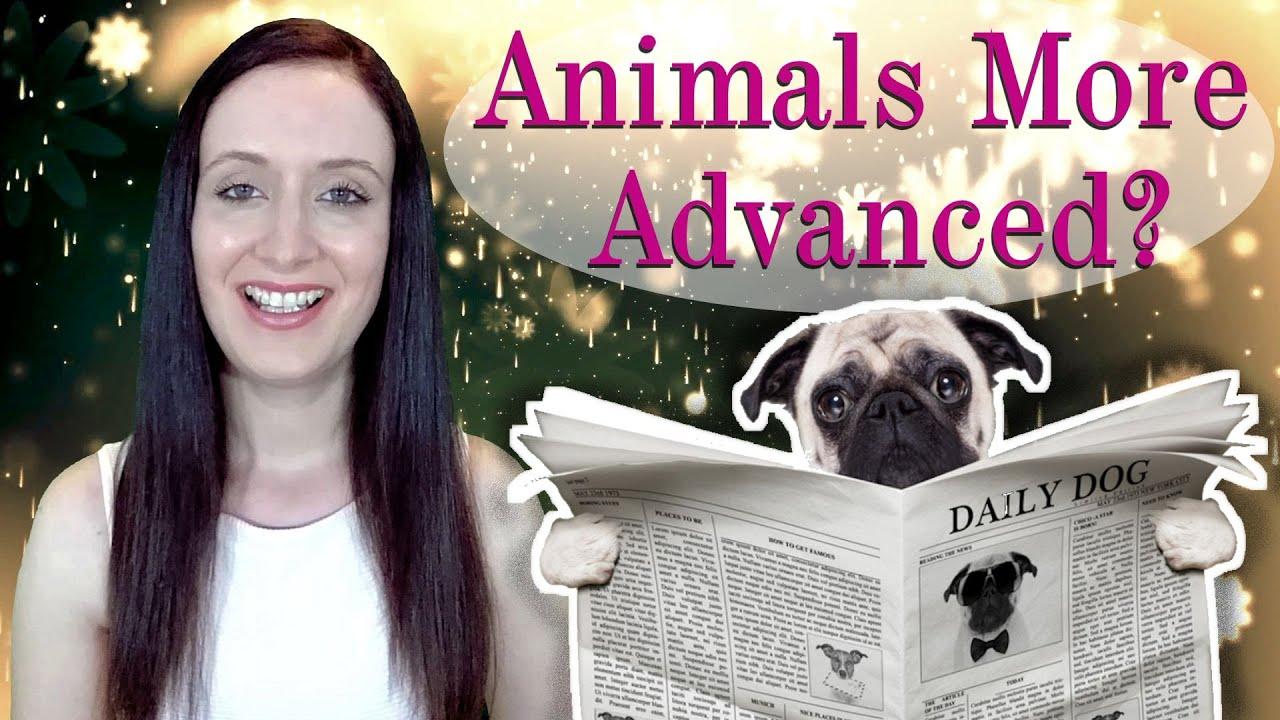 Are Animals/Pets More Spiritually Advanced than Humans?? Animal Souls Progressing to Human