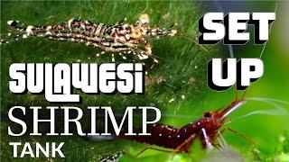 How to setup sulawasi shrimp Tank 苏虾 蘇蝦簡單開缸方法 虾开缸方式 Sulawesi shrimp tank setup
