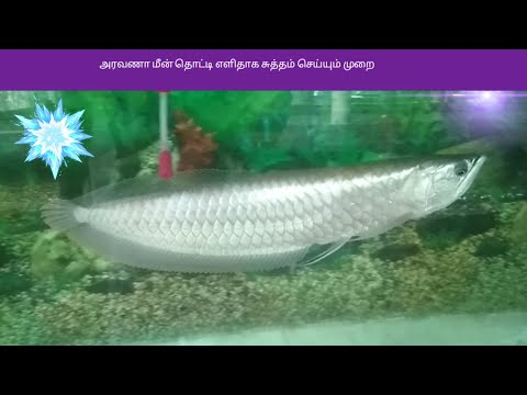 Arawana fish tank easy cleaning only 15min Tamil info
