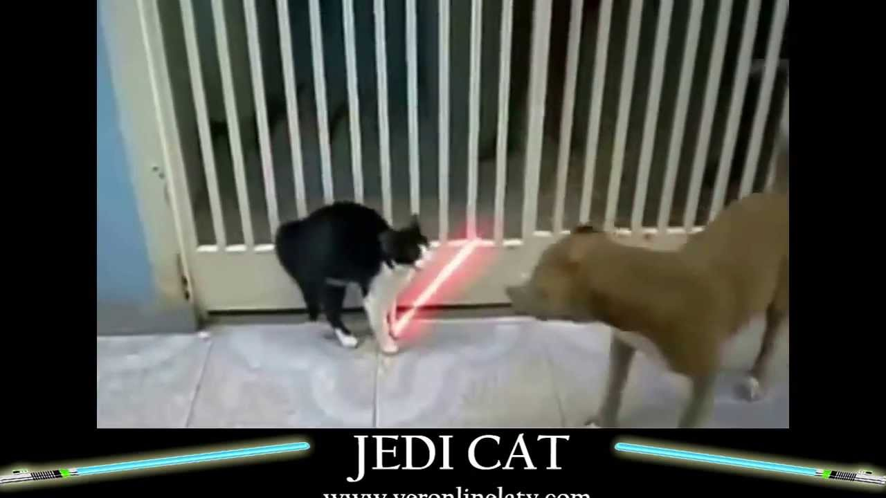 Jedi Cats Epic Lightsaber Duel Youtube