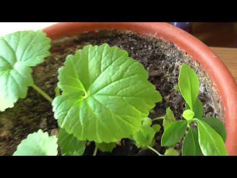 Растения с aliexpress. Что выросло из Китайских семян? Венерина мухоловка.  Розовая Азалия.