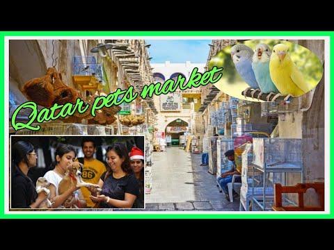 Qatar's pets animals market   Souq waqif Doha Qatar