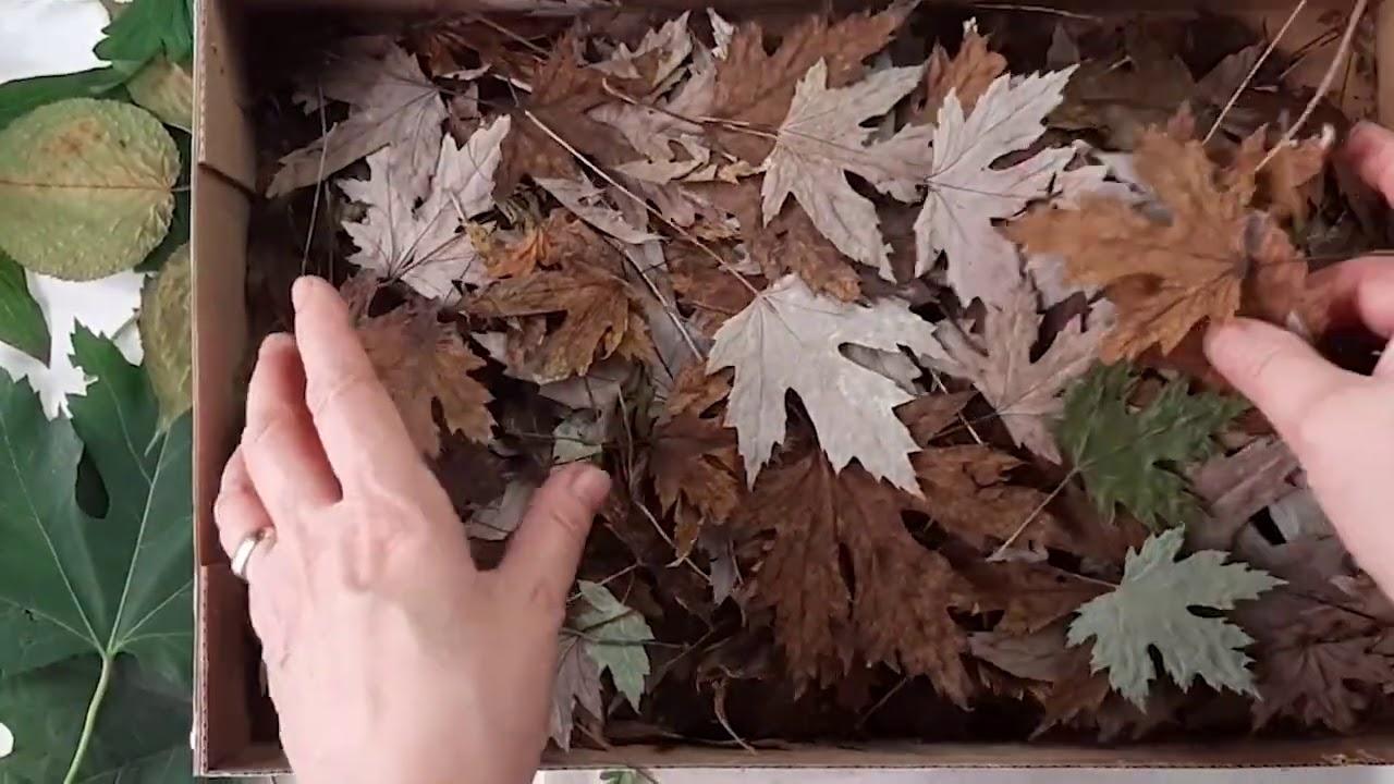 Заготовка листьев для экопринта