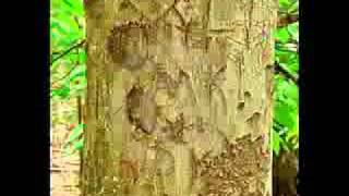 rita rubi hartland - pecinta alam