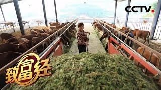 《致富经》 20200430 应下生死承诺 十年财富花开| CCTV农业