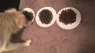 dog food taste test (Wysong, EVO, Blue Buffalo)