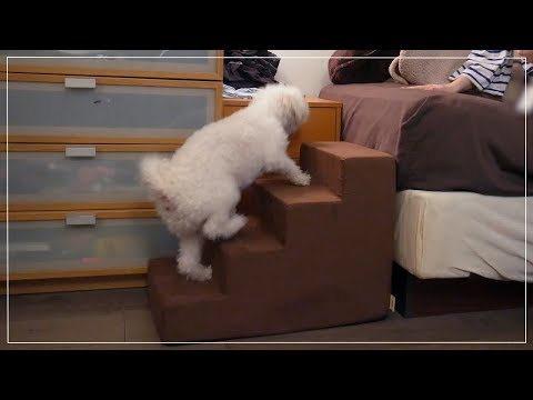 review-::-foam-pet-stairs-(dog-uses-it-for-the-first-time)