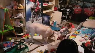 Твори добро,любим нашу собаку!!! Малыш кормит своего лучшего друга!!!