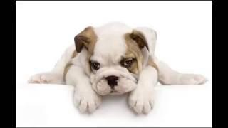 45種狗狗,很難得一見,你認識幾種?據說喜歡狗狗的人都非常有愛心! thumbnail