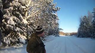Охота с Эг Фаготом на зайца беляка 10 01 19 года 1 часть