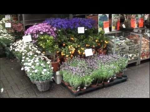 The Flower Market- Amsterdam - Nahum Gofberg