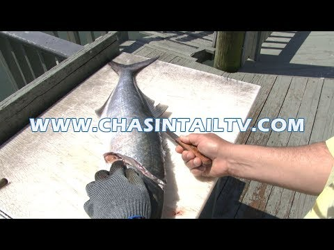 How To Fillet A Bluefish | Chasin' Tail TV