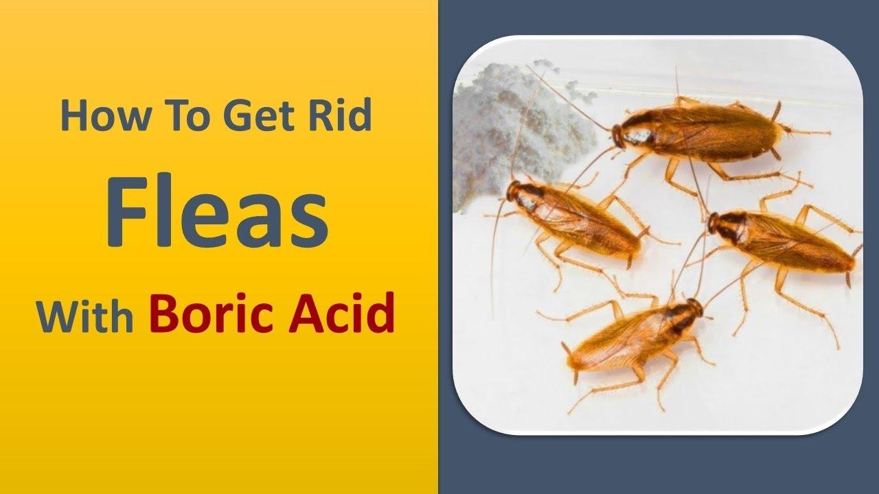 Does peroxide kill fleas