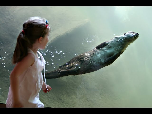 Detroit Zoo | Animal Rescue Story: North American river otters