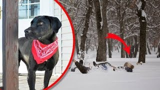 This Dog Saved Elderly Neighbor From Freezing As She Was Lying Helplessly In The Harsh Cold Weather
