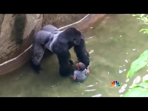 Cincinnati zoo kills gorilla to save boy who fell into enclosure | FULL HD