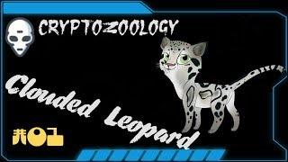 Очень редкие кадры дымчатого леопарда (Тайланд)