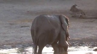 This adorable baby elephant didn't want to finish bath time.
