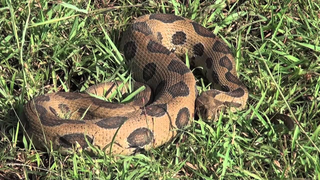 snake information in marathi pdf