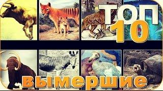 ТОП10 ЖИВОТНЫХ, ВЫМЕРШИХ ПО ВИНЕ ЧЕЛОВЕКА!!!