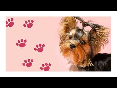 cute puppy teaching how to walk from YouTube · Duration:  13 seconds