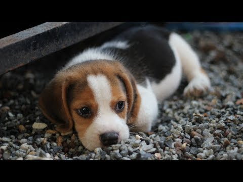 Funny and Cute 🐕 Dogs Compilation 2019❤️