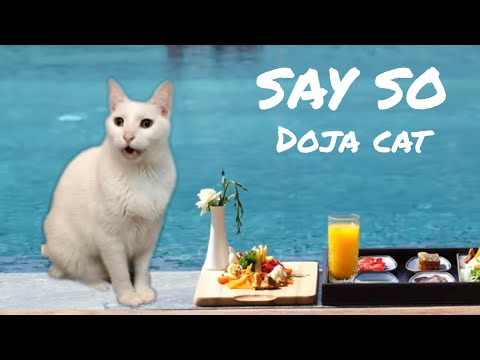 Doja Cat  Say So  Cats Parody