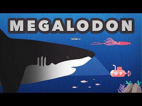 Megalodon Size Comparison