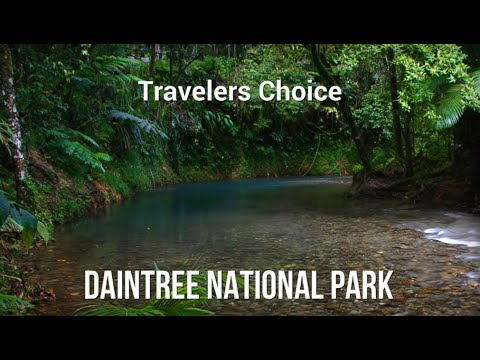 Travelers Choice: Daintree National Park || Places To Travel In Australia
