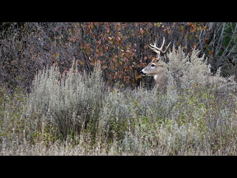 2019 Deer Lottery Preview - NDGNF - 05-16-19