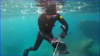 素潜り漁 水中銃の使用について 奄美では漁業組合員でないと水中銃を使...