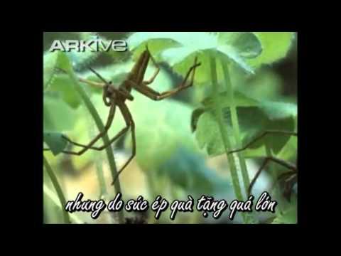 Sinh sản ở nhện